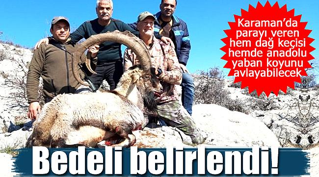 Karaman'da parayı basan Anadolu yaban koyunu ve yaban keçisi avlayabilecek